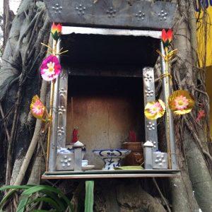 sacred roots vietnam banyan 1